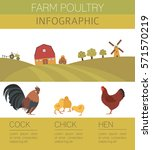 poultry farming. chicken family ... | Shutterstock .eps vector #571570219