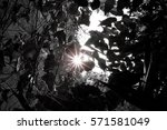 ant view of silhouette black... | Shutterstock . vector #571581049