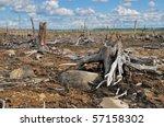 Old Stumps