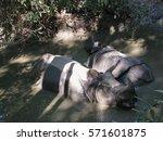rhinos bathing in chitwan | Shutterstock . vector #571601875