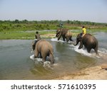 bathing with elephants | Shutterstock . vector #571610395