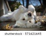 funny dog | Shutterstock . vector #571621645