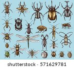 big set of insects bugs beetles ... | Shutterstock .eps vector #571629781