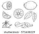 set of vector hand drawn lemon. ... | Shutterstock .eps vector #571638229