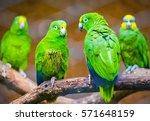 Four Cute Green Parrots Sittin...