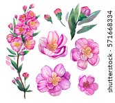 watercolor floral illustration. ... | Shutterstock . vector #571668334