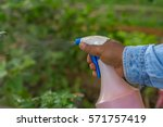 spraying plants by hand. | Shutterstock . vector #571757419