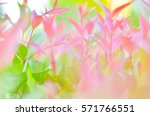 Blurry Colorful Leaves In...