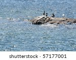 Cormorants and seagull - stock photo