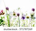 spring flowers | Shutterstock . vector #571787269