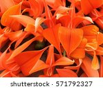 bustard teak | Shutterstock . vector #571792327