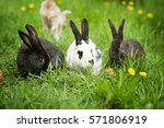 Stock photo three rabbits in green grass on the farm 571806919