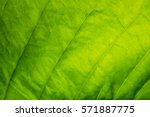Background Pattern Of Leaf
