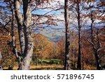 autumn background in woods.... | Shutterstock . vector #571896745