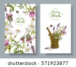 vector vertical wild flowers... | Shutterstock .eps vector #571923877
