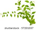 three branches of chinese... | Shutterstock . vector #57201037