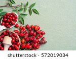 medicinal plants and herbs... | Shutterstock . vector #572019034