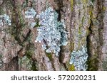 Foliated And Other Lichens On...