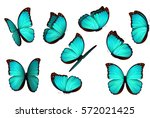 Stock vector set colorful isolated butterflies insects lepidoptera morpho amathonte vector illustration 572021425