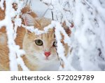 beautiful ginger cat sitting in ...   Shutterstock . vector #572029789