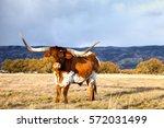 texas longhorn | Shutterstock . vector #572031499