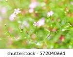 gypsophila flower | Shutterstock . vector #572040661