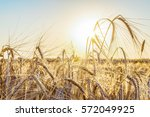 agricultural background with...   Shutterstock . vector #572049925