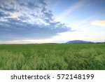 sunset at a paddy field in... | Shutterstock . vector #572148199