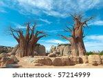 Baobab Tree At Blue Sky...