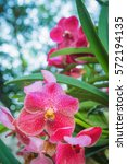 close up orchids and bokeh...   Shutterstock . vector #572194135