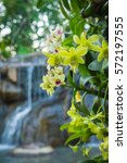 beautiful orchids and waterfall ...   Shutterstock . vector #572197555
