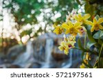 beautiful orchids and waterfall ...   Shutterstock . vector #572197561
