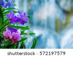 beautiful orchids and waterfall ...   Shutterstock . vector #572197579