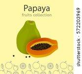ripe papaya on a light...   Shutterstock .eps vector #572203969