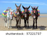 Donkeys At A Beach Resort In Uk