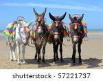 Donkeys At A Beach Resort In Uk