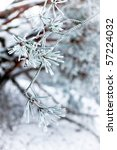 Twig of conifer with frost on the needles - stock photo