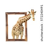 Giraffe In Bamboo Frame With 3...