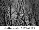 Black Tree Branches At Winter