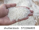 japanese rice  small milled rice | Shutterstock . vector #572286805