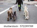 New York City Dog Walker....