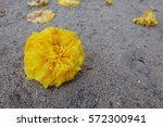 a marigold on the ground | Shutterstock . vector #572300941