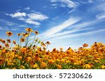 Flower Field And Blue Sky.
