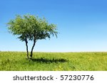 green field with lonely tree | Shutterstock . vector #57230776