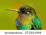Detail Of Hummingbird Glossy...