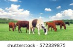 cows on the farm. animal... | Shutterstock . vector #572339875