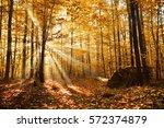 autumn dawn in forest   Shutterstock . vector #572374879