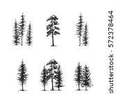 conifers sketch set  hand... | Shutterstock .eps vector #572378464