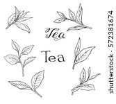 set of tea leaves and branches... | Shutterstock .eps vector #572381674