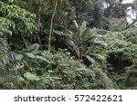 powerful jungle vegetation  the ... | Shutterstock . vector #572422621